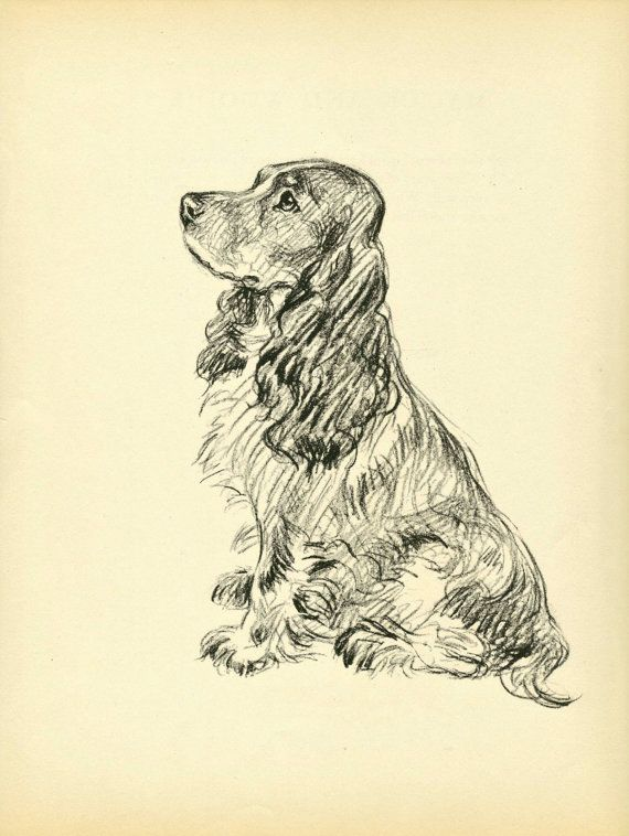 SPANIEL Dog Print, 1930s Lucy Dawson, Home Wall Decor, Interior Design, Art Illustration to Frame, plate, black white brown, B-1
