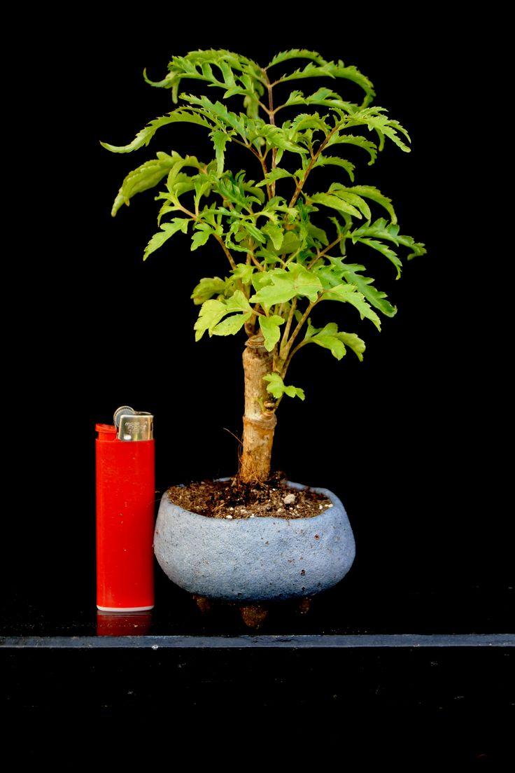 Plant: Ulrich Fendrich Pot: Roman Husmann