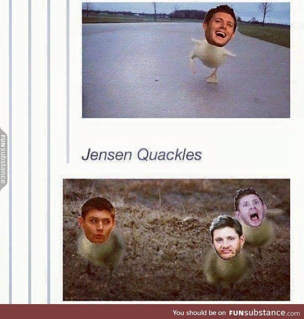 Quackles!