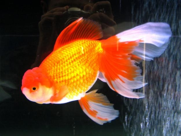 181 best images about fish and aquariums on pinterest for Alabama freshwater fish