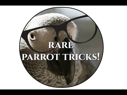 Very unusual parrot tricks! You probably haven't seen these before - YouTube