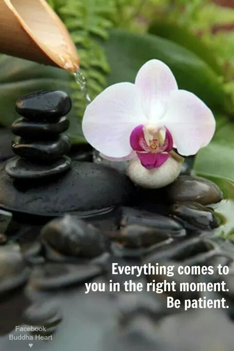 Everything comes to you in the right moment. Be patient. Inspiring #quotes and #affirmations by Calm Down Now, an empowering mobile app for overcoming anxiety. For iOS: http://cal.ms/1mtzooS For Android: http://cal.ms/NaXUeo