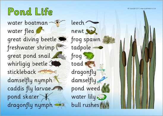 17 best images about pond animals and vegetables list name for Backyard pond animals