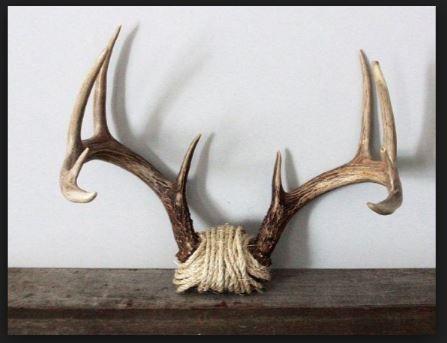 Oltre 25 fantastiche idee su corna di cervo su pinterest for Cabine di cresta antler