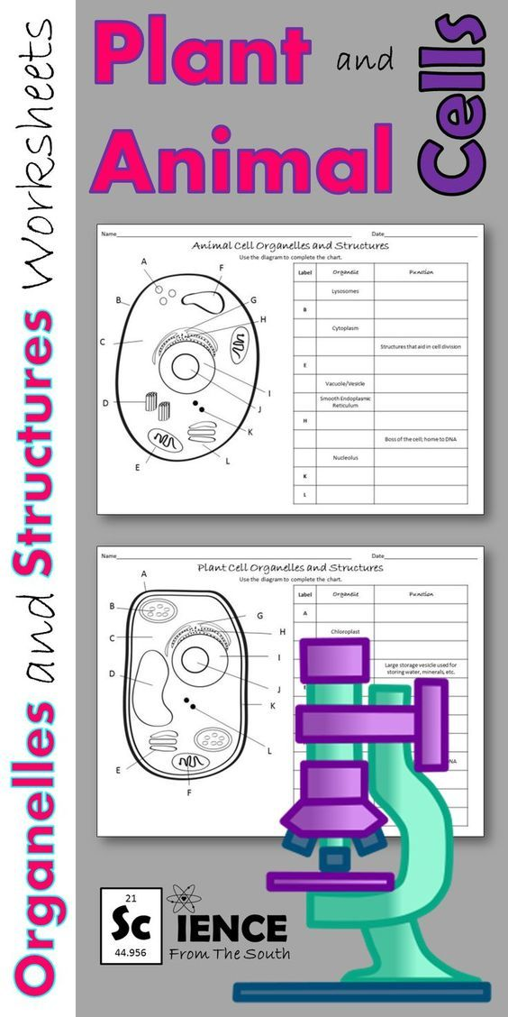 Plant and Animal Cells Worksheets for Middle and High ...