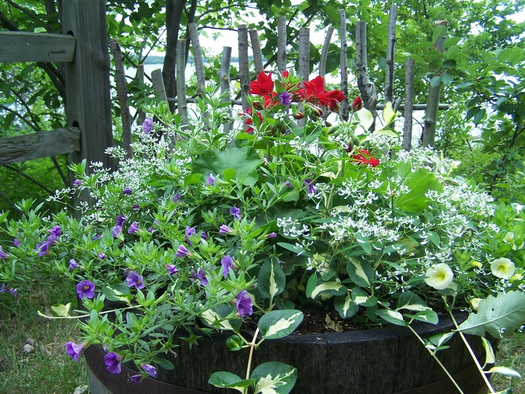 garden planters barrels with 18225573464967167 on Plant identification a   c further Half Whiskey Barrel Planter besides 10 Easy Pieces Fluted Galvanized Ribbed Metal Zinc Vintage Wash Tub Barrel Planters as well Wooden Products in addition 25 Brilliant Diy Ways Of Reusing Old Wine Barrels.