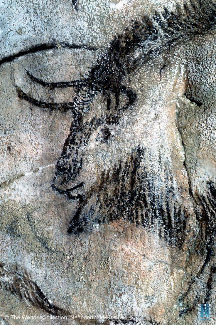 niaux - un autre tête de bison