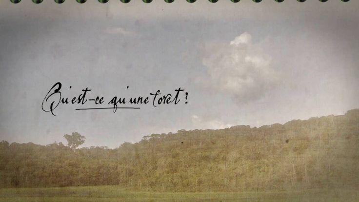 Vidéo :  Qu'est-ce qu'une forêt ? Explications de Francis Hallé.