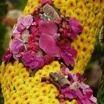 jockey silk chelsea flower show charlotte murrant