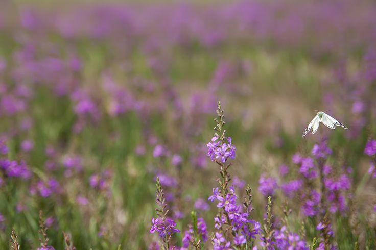 Butterfly in a wildflower meadow