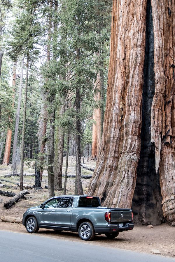 Timeless beauty can always be found among nature. Experience ancient and powerful trees in a new and rugged 2017 Honda Ridgeline.