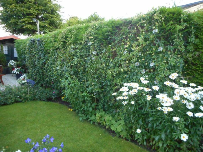 Foto uit de tuin van Deprouw