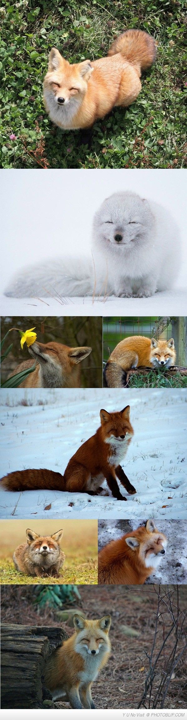 Foxes Are Such Cool Animals