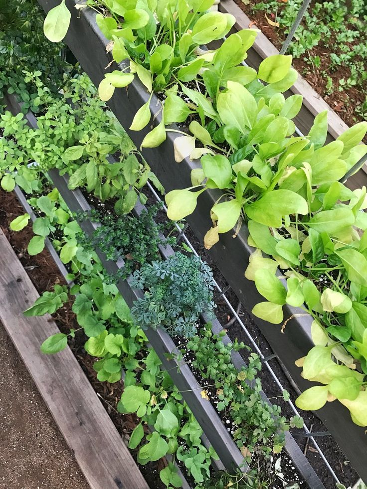 Rain Gutter Planters work very well for growing shallow