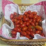 Tomatinhos da minha .horta