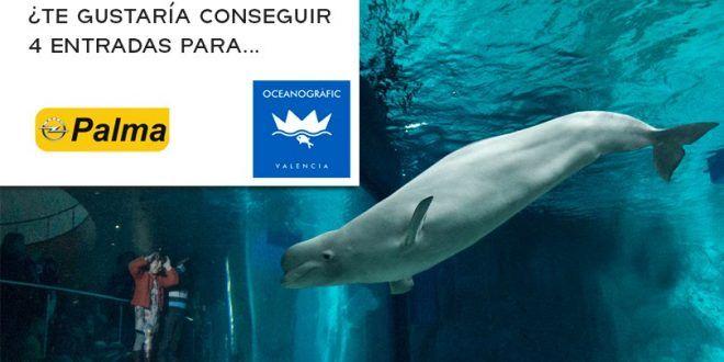 Sorteo de 4 entradas para el Oceanogràfic de Valencia de Automóviles Palma #sorteo #concurso http://sorteosconcursos.es/2016/12/sorteo-4-entradas-oceanografic/