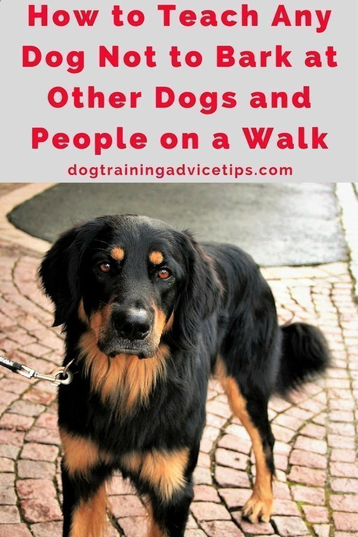 Pet Training How To Teach Any Dog Not To Bark At Other Dogs And
