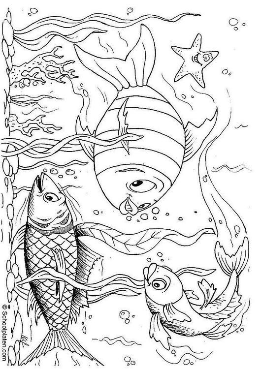 Coloring page fishes - coloring picture fishes. Free coloring sheets to print and download. Images for schools and education - teaching materials. Img 4387.