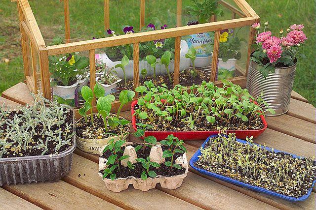 Créer le matériel de semis avec des contenants récupérés