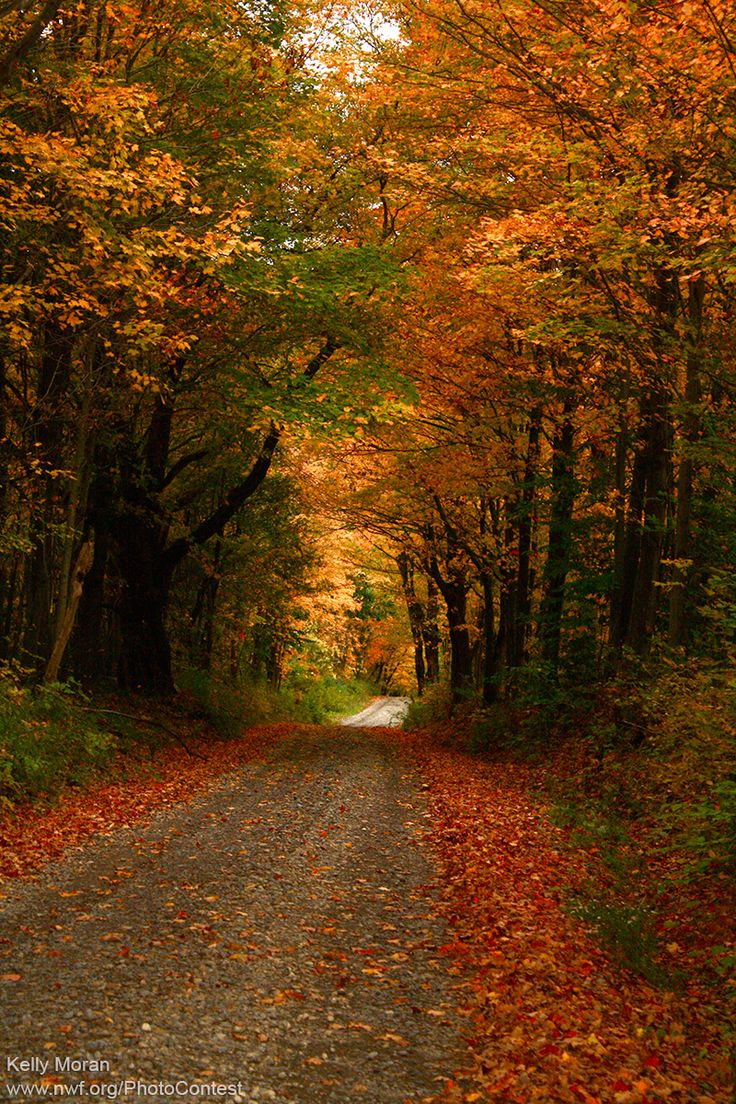 From the book where you might see the beautiful autumn leaves - Why Leaves Fall From Trees In Autumn From National Wildlife Federation