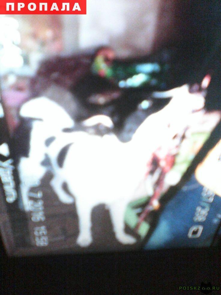 Пропала собака кобель г.Нижний Новгород http://poiskzoo.ru/board/read25447.html  POISKZOO.RU/25447 Пропала собака .. июля ..г. Кобель черно-белого окраса. уши чёрные. метис лайки. очень любит детей!   РЕПОСТ! @POISKZOO2 #POISKZOO.RU #Пропала #собака #Пропала_собака #ПропалаСобака #Нижний #Новгород