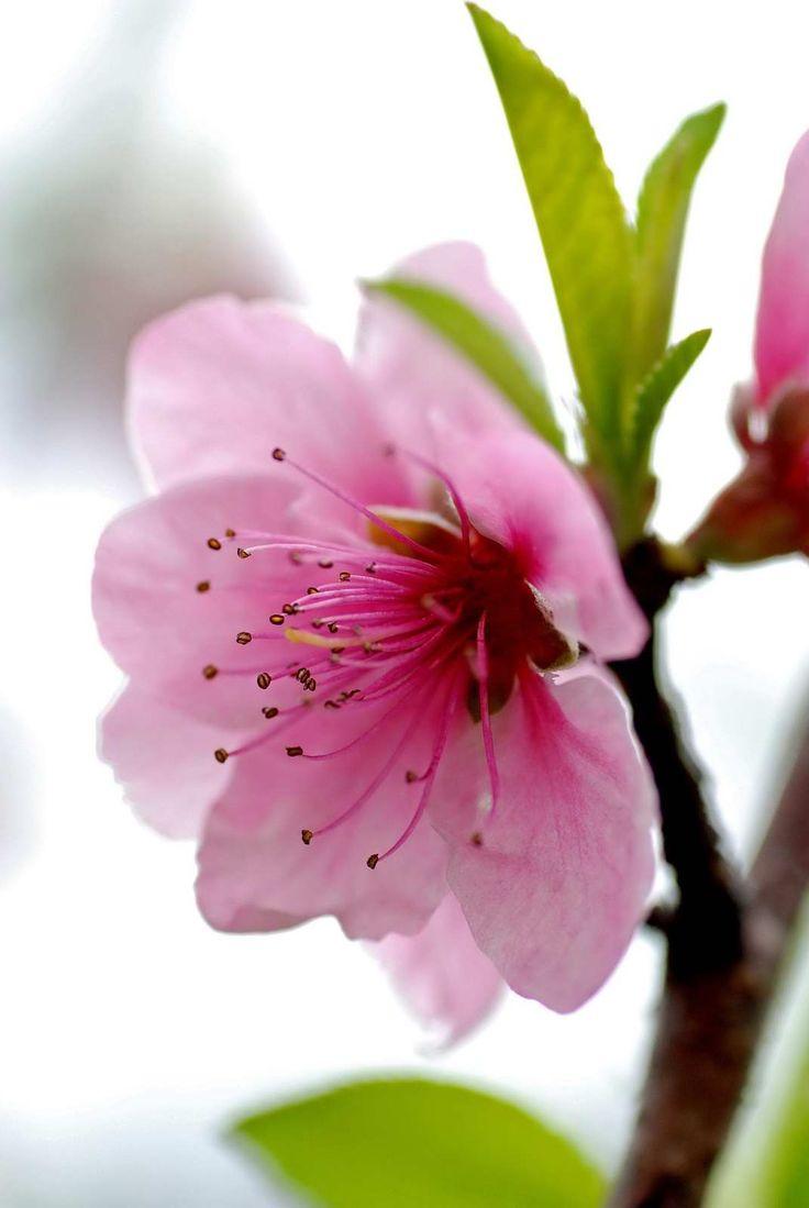 Spring Blossoms                                                                                                                                                     Mais                                                                                                                                                     Mais