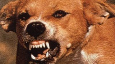 Rabies Basics Description A rapidly progressive central nervous system (CNS) infection caused by an RNA rhabdovirus and affecting mammals, including humans The disease is generally considered to be 100% fatal once symptoms develop.