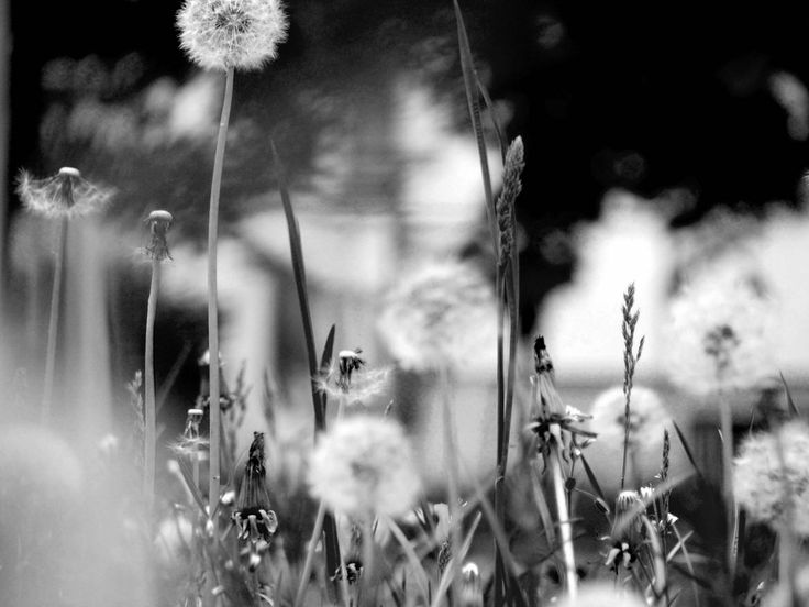 ikozlai: .photography .arts .design | .blackwhite