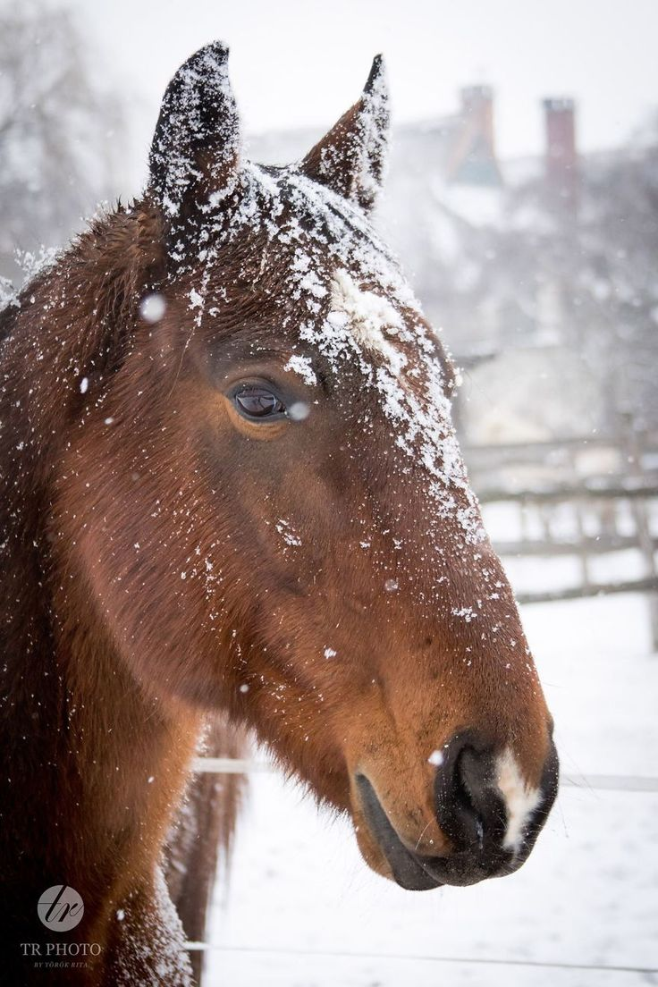 I Live With Horses… And I Take Pictures Of Them | Bored Panda