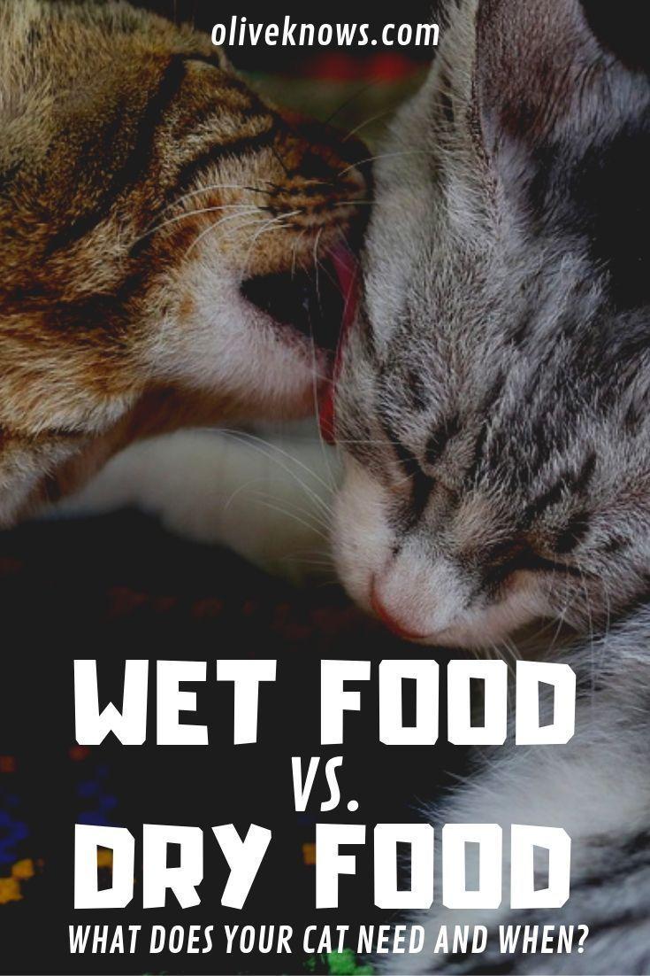 Wet Food Vs Dry Food Cats Cat Insurance Cat Parenting