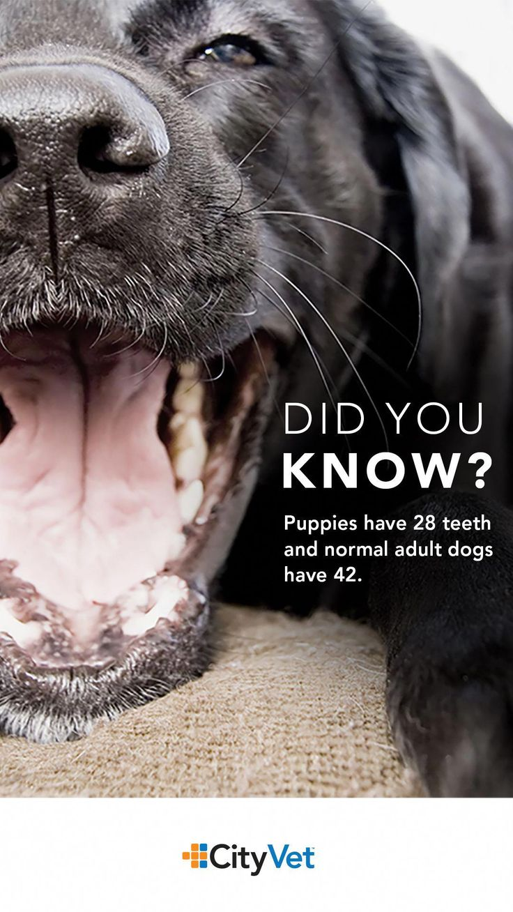 Dog dentals are important for a reason make sure to