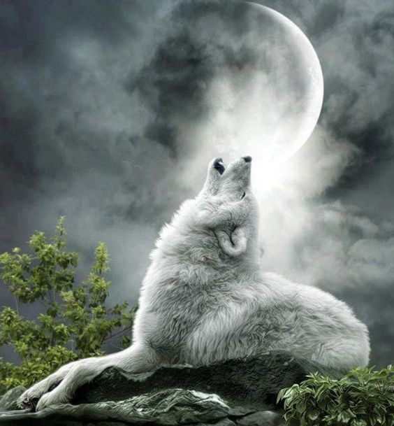 картинка волк воет на луну сидя благоволит российская