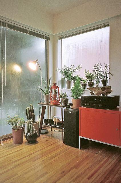 a cacti corner is essential