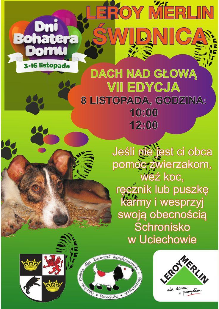 #weekend #akcja #schronisko #pomoc #prezenty #psy