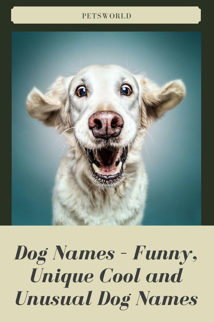 Dog Names Popular Male And Female Dog Names Dog Names Dog Names Unique Unusual Dog Names