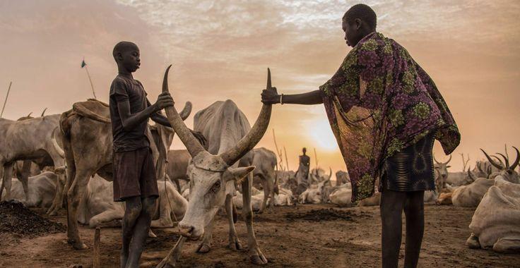 Niños sudaneses de la tribu Dinka cuidan de una vaca en Mingkaman, estado de Lagos, Sudán del Sur, el 3 de marzo de 2018.
