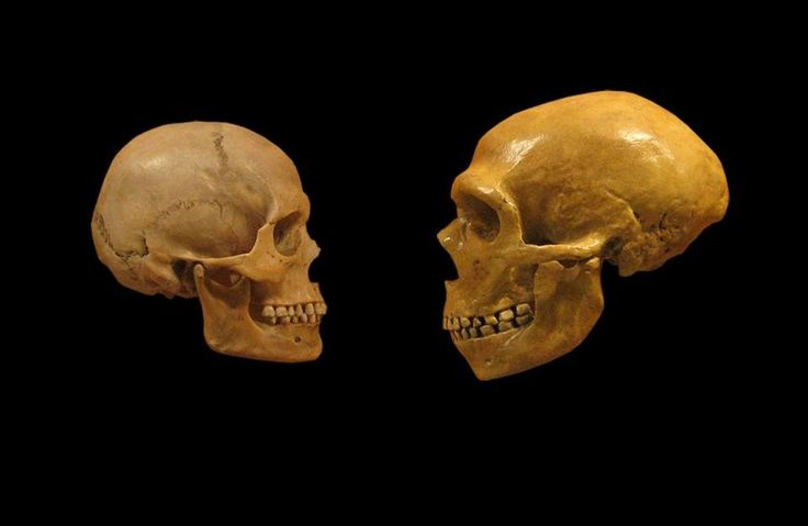 The mutations humans acquired from Neanderthals are slowly being purged from the genome overtime