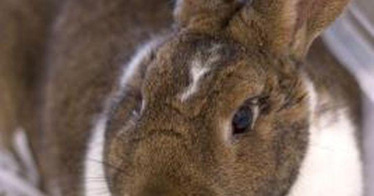 Cómo hacer una jaula para tus conejos. Los conejos requieren un hogar limpio, seco y seguro contra los depredadores. La madera no es deseable en una jaula de conejos porque los conejos tienden a masticarla y absorbe orina, haciendo difícil el saneamiento. La madera tratada nunca debería ser usada donde los conejos pueden masticarla. La mejor manera de construir una jaula para tus ...