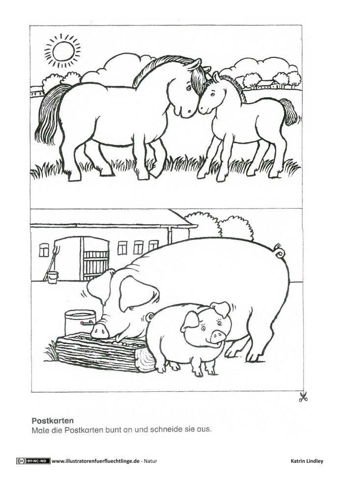 Download Als Pdf Natur Bauernhof Postkarten Pferd Schwein Lindley Bauernhof Thema Bauernhof Postkarten
