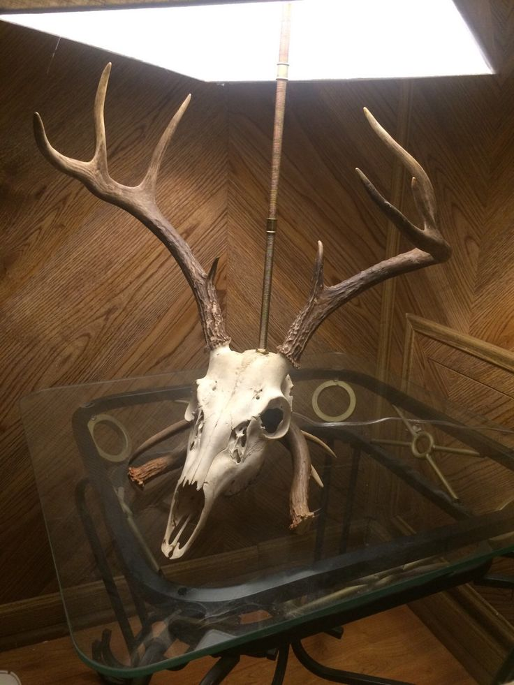 Unique Deer Skull Table Lamp Sale Price Reduced Shops