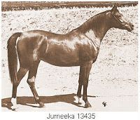 Jurneeka++ (Fadjur x Fadneeka). 1958 bay mare. Dam of Khemosabi++++// (x Amerigo) and Jurdino++ (x Regis).