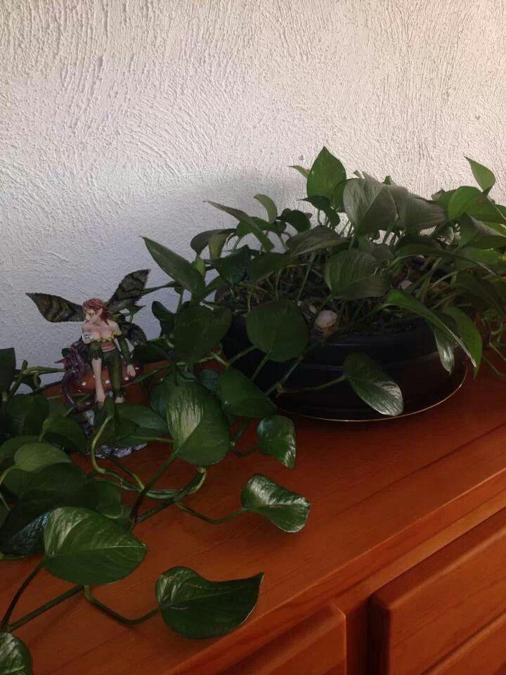 Cómo se encuentra la energía de tu casa? Cuando esta circulando adecuadamente, las plantas naturales no se secan.