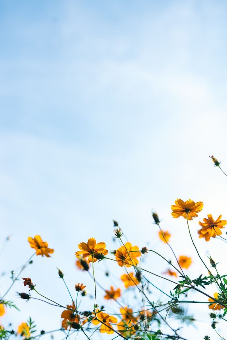 Yellow Flowers Spring Landscape Photos Spring Pictures Spring Wallpaper
