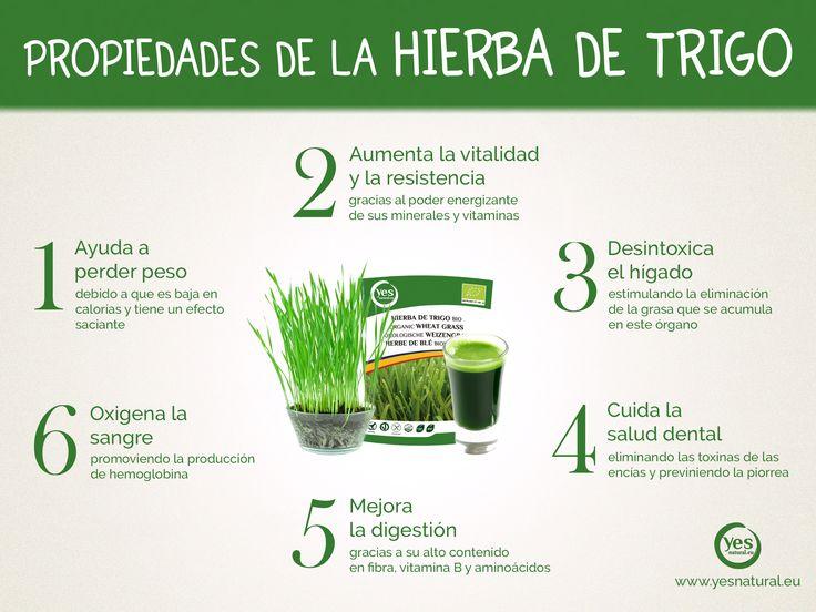 Propiedades que se atribuyen a la hierba de trigo. #superalimento #hierbadetrigo #trigo #nutricion #alimentacionsaludable