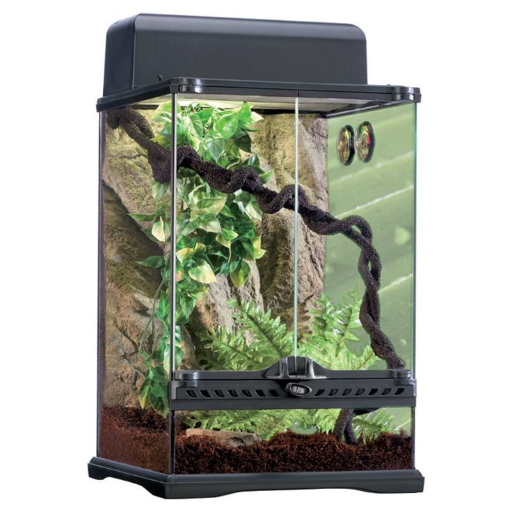 "Medium, Rainforest terrarium kit includes a 24""; L X 18""; W X 18""; H glass terrarium, rock background, soil substrate, reptile cave, water dish, 3 plants, jungle vine, hygrometer, thermometer and top canopy."