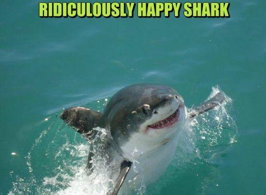 Happy Shark - www.meme-lol.com