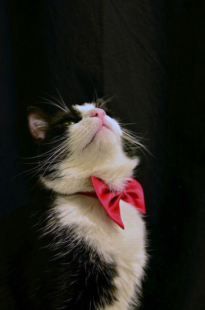 Arkimedes Katt