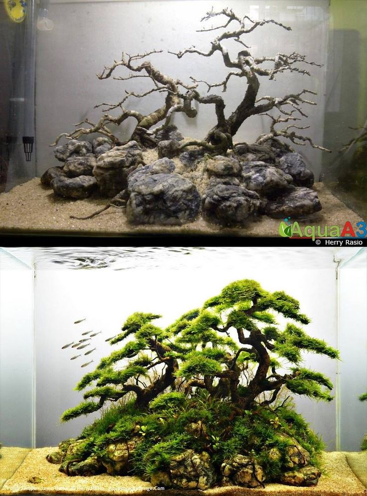 25 best ideas about aquascaping on pinterest aquarium for Decoration zen aquarium