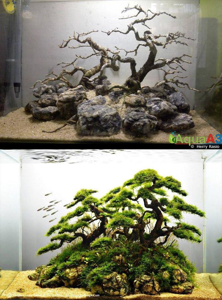913 best images about aquarium fish tank aquascape for Aquarium ideas