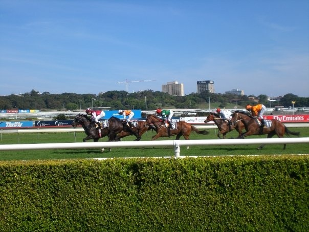 Horse racing at the Randwick Racecourse
